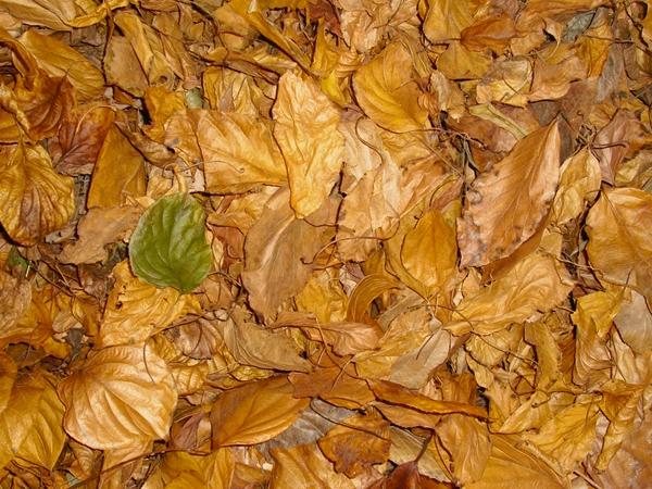 Herbstlaub als Versteck für Insekten