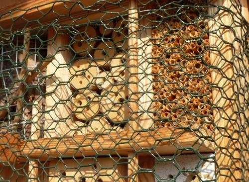 Insektenhaus Schutz vor Vögeln
