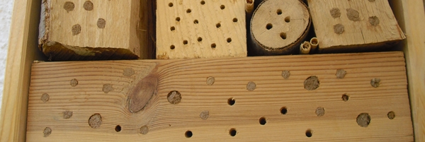 Insektenhaus pflegen 2