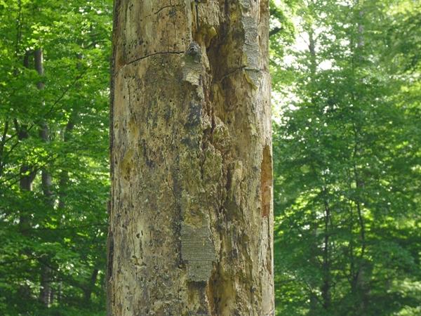 natürliche Nistplätze für Wildbienen